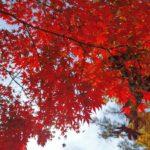 東岡崎公園